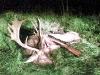 20071006_damelejtes_71.jpg
