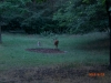 2009_termeszetfotok_vadaszat_06.jpg